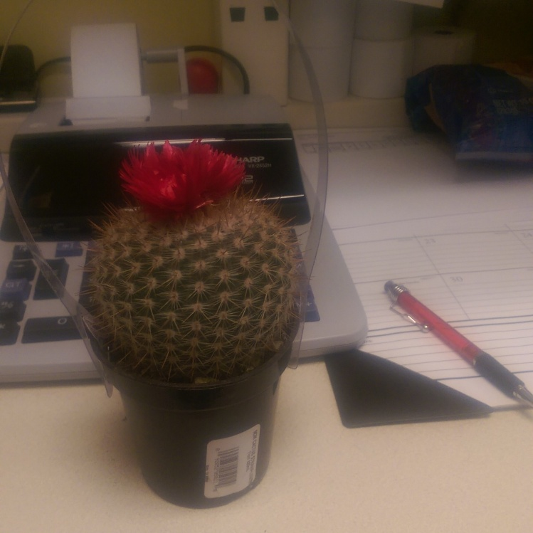 My office cactus. Also pictured: the horrible state of (part of) my desk.